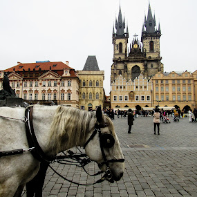 Horse in Old Town of Prague by Shari Linger - City,  Street & Park  Historic Districts ( eastern europe, oldtown, central district, horse and carriage, city center, czech republic, prague,  )