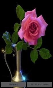 Pink Rose Pot Live Wallpaper - náhled