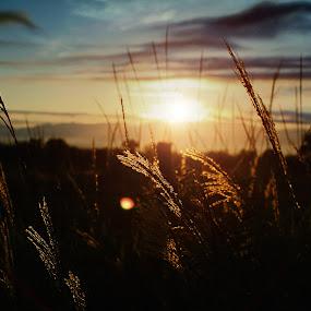 by Rikkiboi Arim - Landscapes Prairies, Meadows & Fields