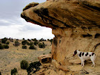 Torrey hunting for rock art