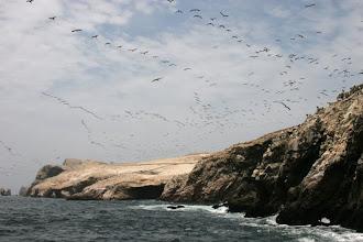 Photo: Des oiseaux en vol par mllliers