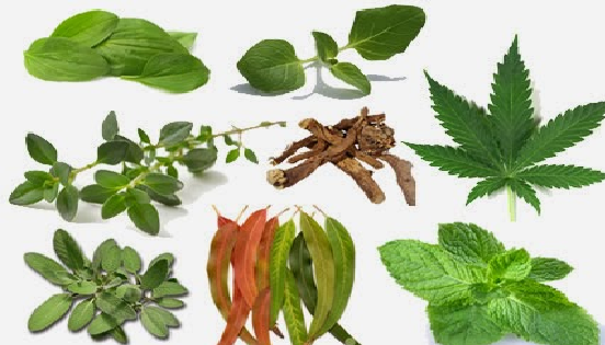 15 Plants And Herbs That Can Help Heal Your Lungs