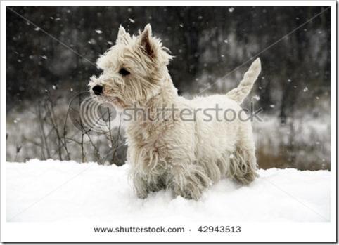 westi snow7