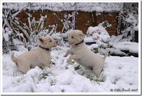westi snow5