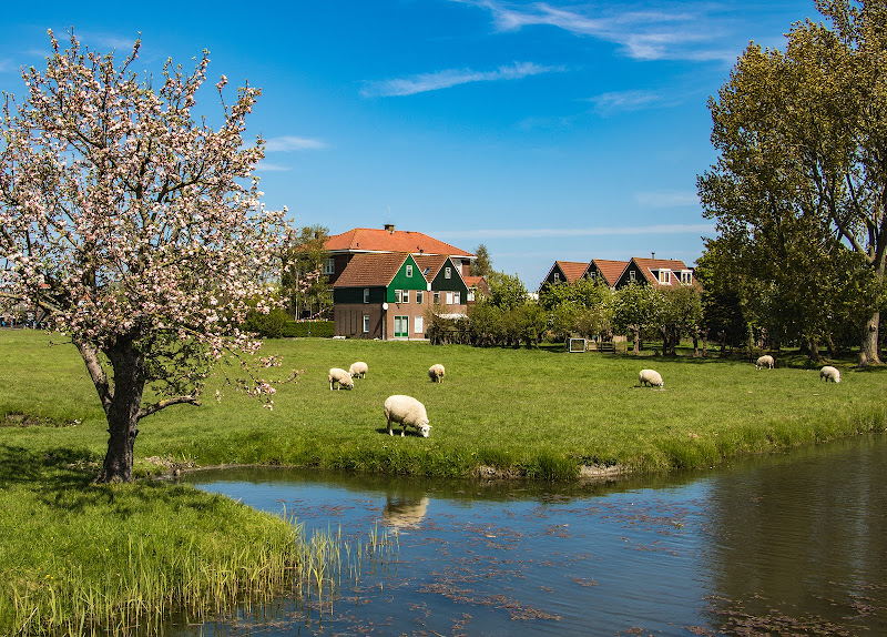 Peaceful Spring di Giovanni Coste