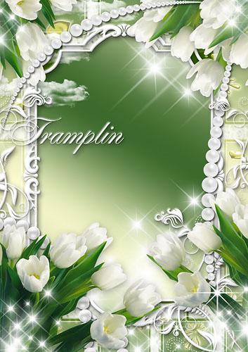 Рамка для фото – Белые тюльпаны, как вельможи
