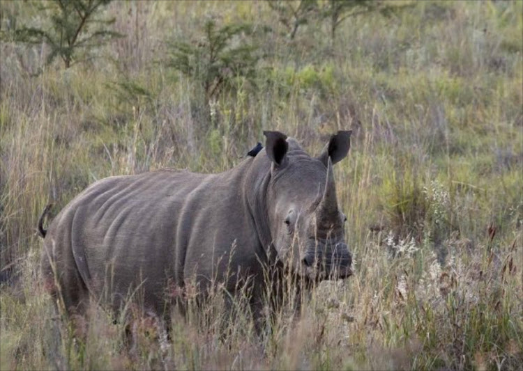 Rhino. Picture: REUTERS