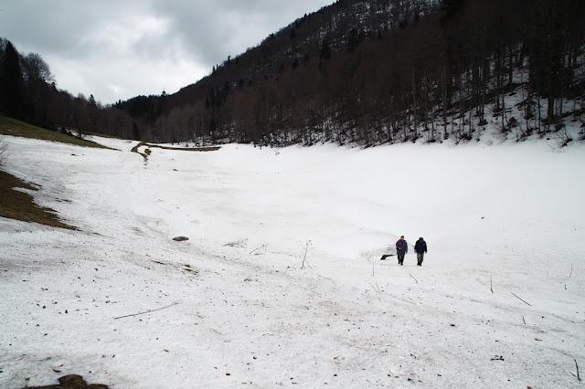 снежник агулова балка