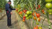 El campo  almeriense aporta muchos millones de euros de facturación a Cepes.