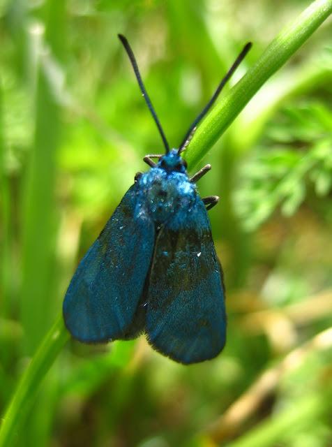 Slike insekata- buba IMG_3432