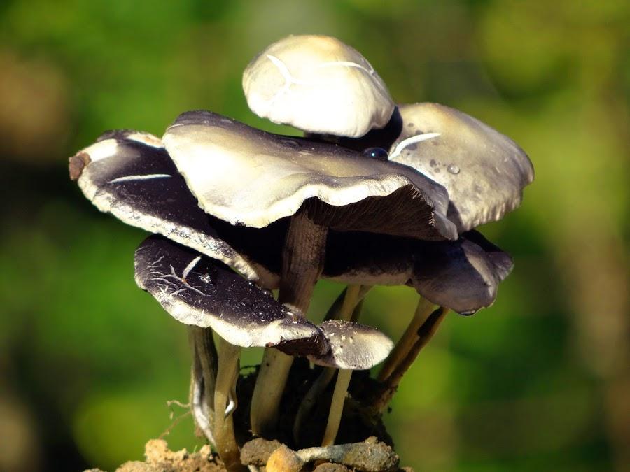 Mushroom  by Asif Bora - Nature Up Close Mushrooms & Fungi (  )
