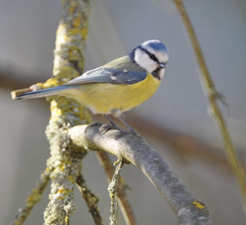 quelque oiseaux du jardin DSC_0642