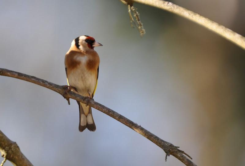 quelque oiseaux du jardin DSC_0545