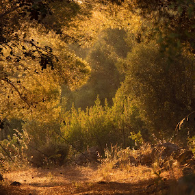 Magic at the golden hour by Pixie Simona - Landscapes Forests ( magic, path, magical, forest, soft light, golden light, leaves, golden hour, depth of field, fairytale, perspective,  )