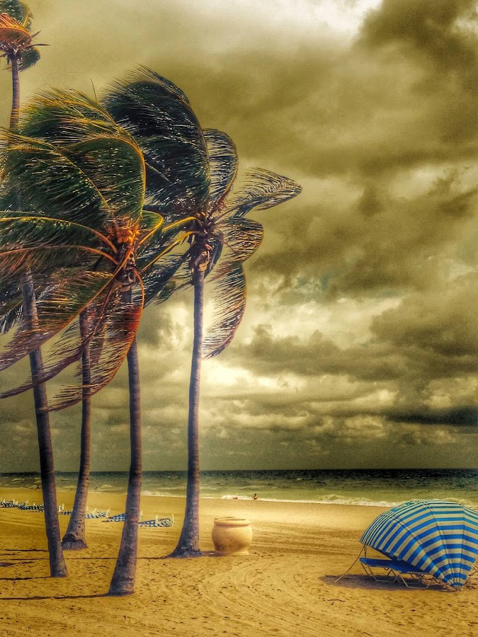 At the beach by Frank Vila - Uncategorized All Uncategorized ( fort lauderdale florida, relax, tranquil, relaxing, tranquility )