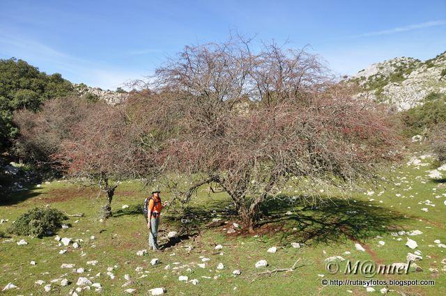 Sierra de Los Pinos
