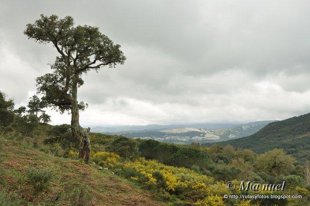 Sendero La Teja