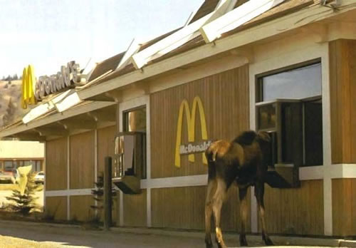 Wonder if the moose is lovin it...