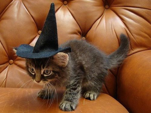 Caturday before Halloween, bitches!