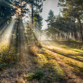 lightharp in the forest by Egon Zitter - Landscapes Forests ( lightharp, beam, forest, sunray, morning, woods )