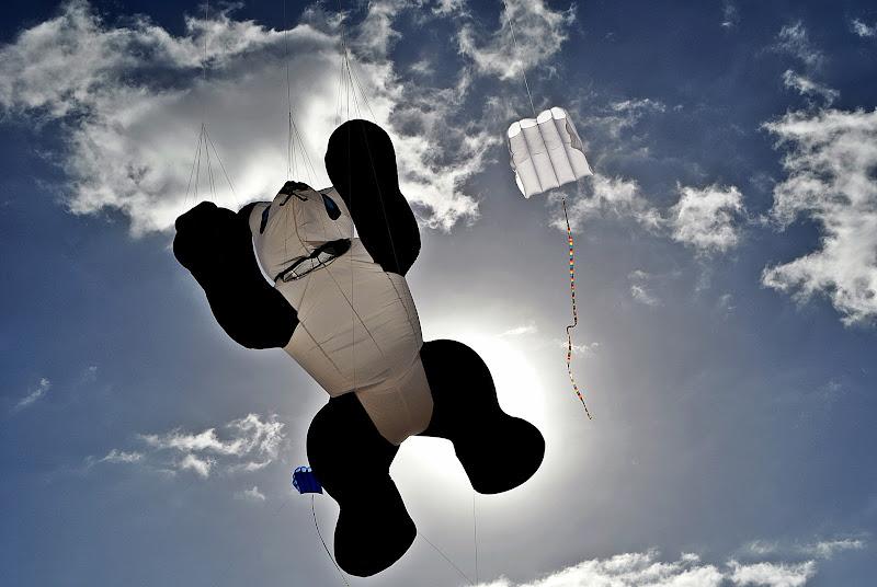 ho insegnato ad un panda a volare di kaos