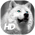 Wolf Wallpaper apk