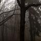 foggy forest wallpaper - dark castle wallpaper APK