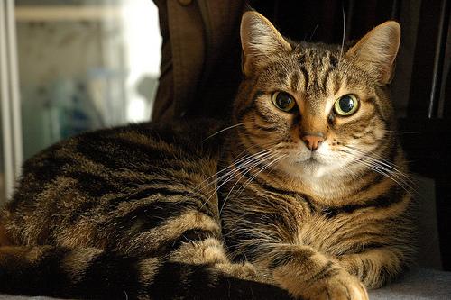 cat on antidpressants