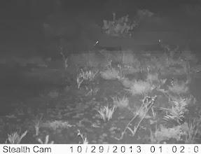 Photo: A hare and a waterbuck Uma lebre e uma quissema