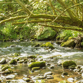 The peaceful river  by Louise Corr - Nature Up Close Water