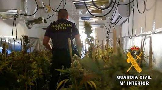 Incautadas 189 plantas de cannabis en dos viviendas de Roquetas de Mar