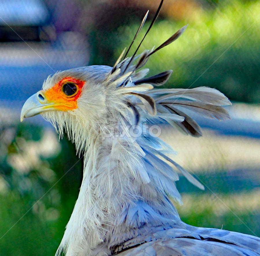 by Kari Schoen - Animals Birds (  )
