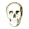 Anatomy Quiz icon