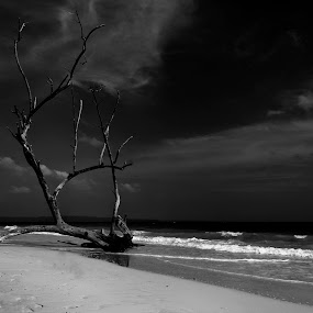 The Black Waters by D K - Black & White Landscapes ( andaman, water, india, travel, beach )