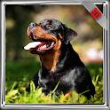 Rottweiler Dog Wallpaper icon