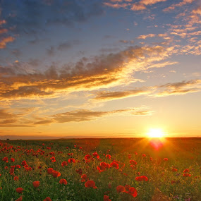 summer sunst 1 by Victor Pavel - Landscapes Prairies, Meadows & Fields ( .... )