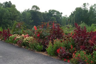 Photo: Late summer the amaranthus really dominate the bed.
