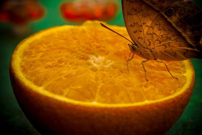 Mi faccio un pieno di Vitamina C di NickAdami
