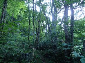 暫くは樹林帯を進む