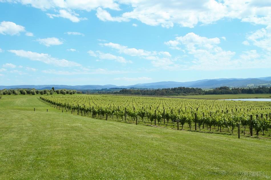 Domaine Chandon Winery