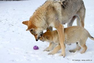 Photo: Mámo, to je dobrá hra!