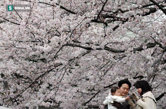 8 bí quyết giúp người Nhật sống thọ nhất thế giới: Ai áp dụng được, người đó sẽ khỏe mạnh - Ảnh 12.
