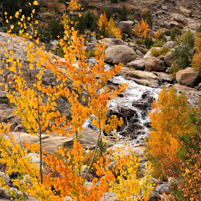 Alluvial Fan by Katie McKinney - Landscapes Forests ( alluvial fan, national park, nature, autumn, colorful, waterfall, rocky mountains, fall, rocky mountain national park, leaves, river,  )