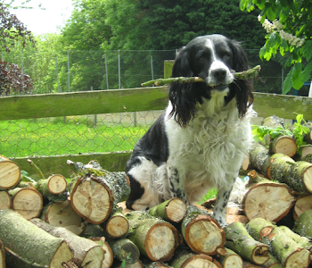 tree care and maintenance worcestershire