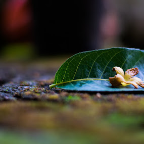 Fallen Leaves by Rahul Manoj - Novices Only Flowers & Plants ( green, plants, fallen leaves, leaves, flower )