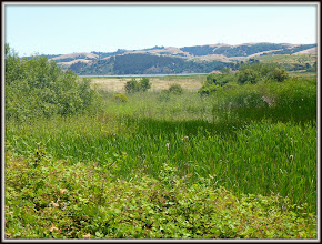 Photo: Benicia State Recreation Area, CA