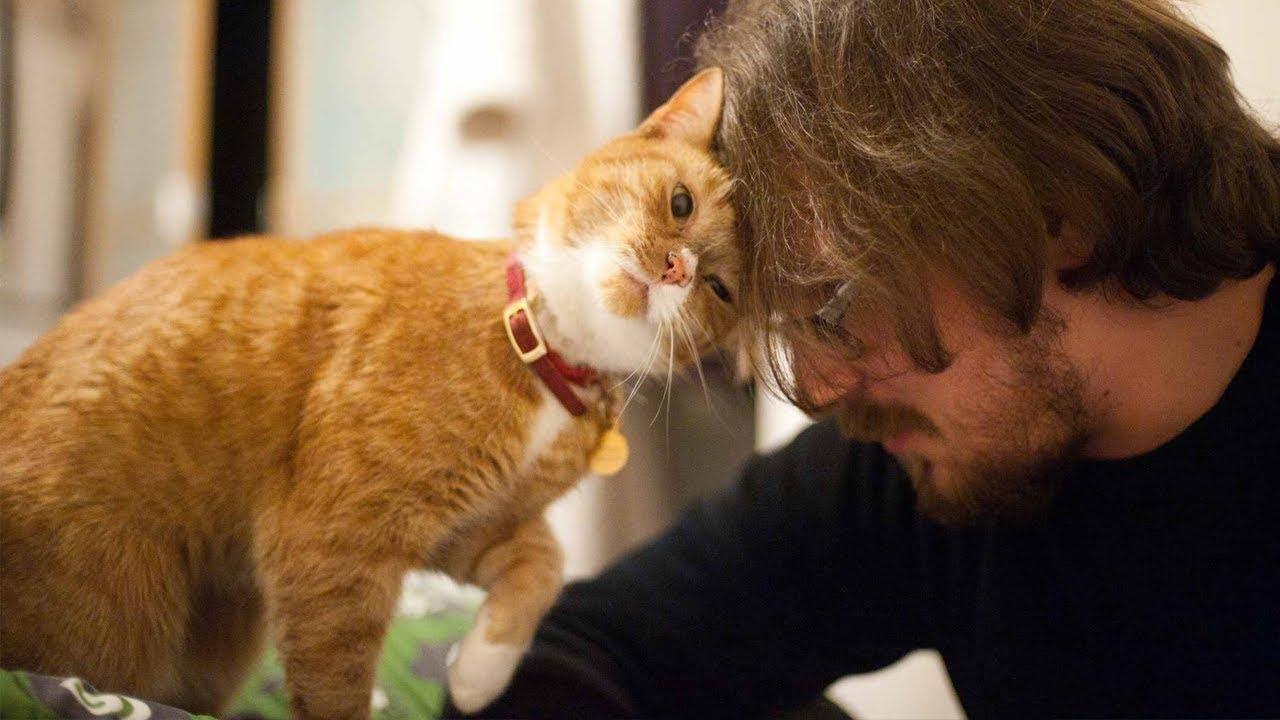 Do Cats Really Love Their Owners More Than Dogs?