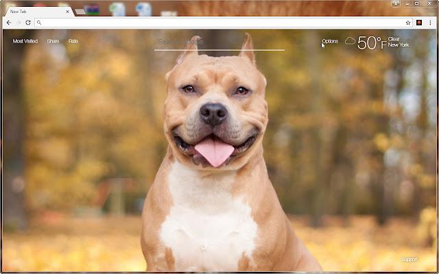 Pitbull Wallpaper HD Dogs New Tab Themes