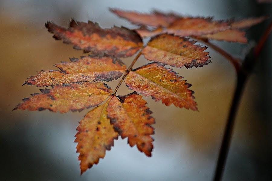 by Inger Lefstad - Nature Up Close Leaves & Grasses