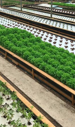 Production de salades Nutreets
